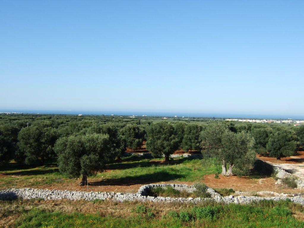 Reisebericht - Kulinarisches Apulien