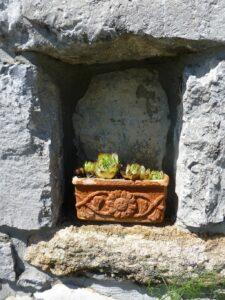 Slowenien Blume im Stein - Sento Wanderreisen